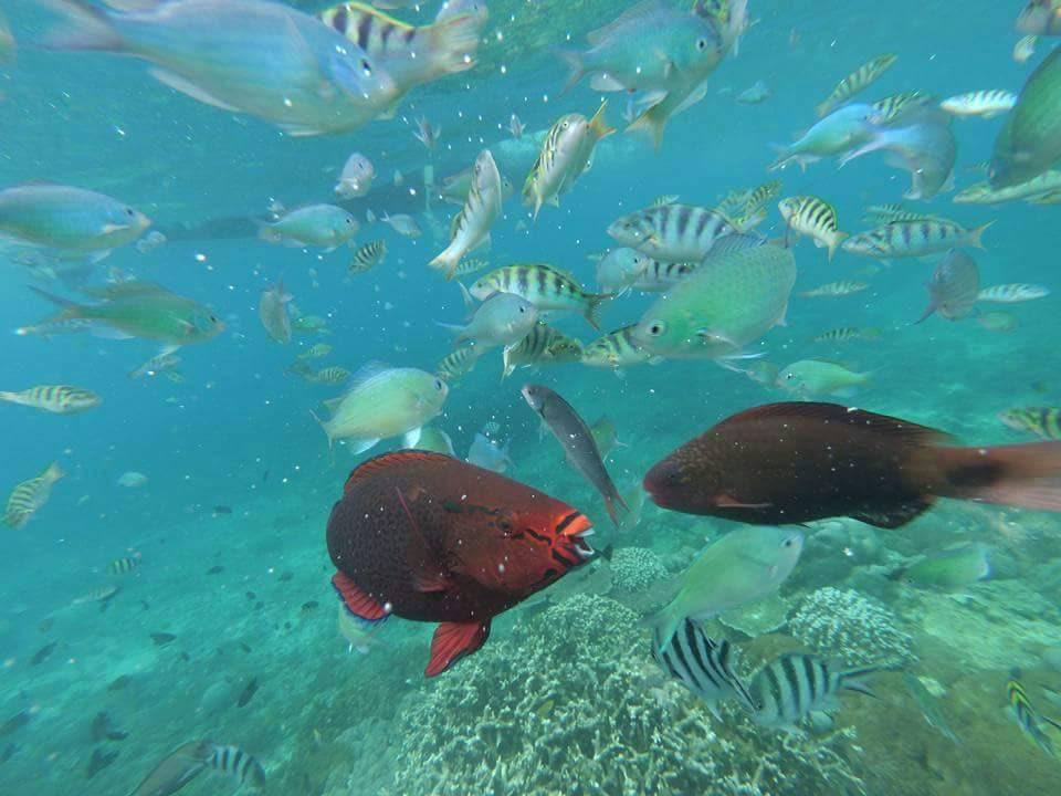 nusa-lembongan-snorkeling6